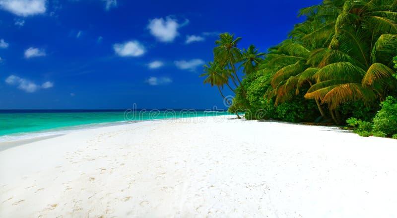 Панорама пляжа стоковое фото rf