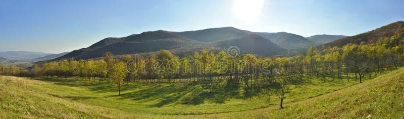 Панорама сельской местности леса стоковые изображения rf
