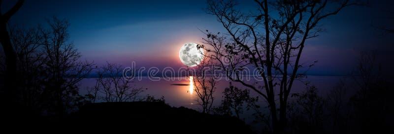 панорама Силуэты древесин и красивого восхода луны, яркого fu стоковая фотография rf