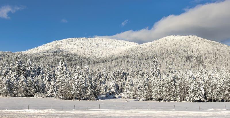 Панорама снега покрыла гору стоковая фотография rf
