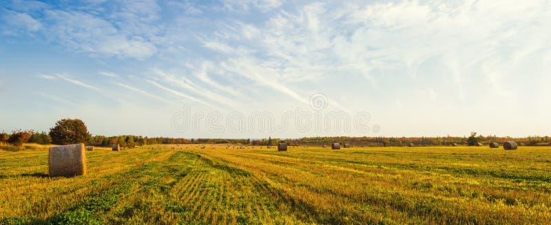 Панорама сценарного взгляда стогов сена на падении стоковое фото
