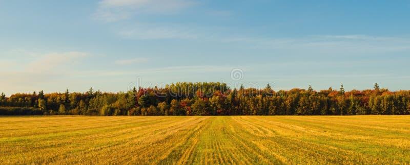 Панорама сцены PEI сельской на падении стоковое фото