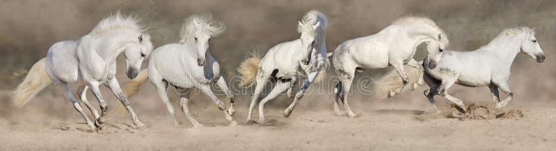 Панорама табуна лошади стоковое фото rf