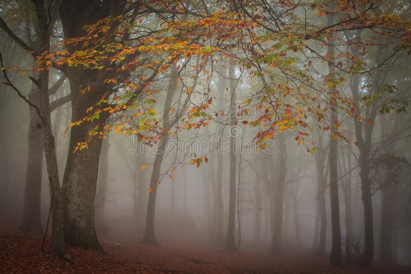 Панорама туманного леса сказка жутко выглядящая деревня в туманный день стоковое фото