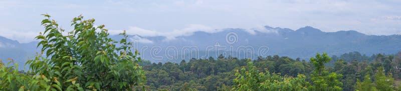 Панорама, туман на горе за зеленым лесом стоковое фото