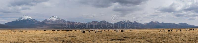 Панорама Altiplano стоковые изображения rf