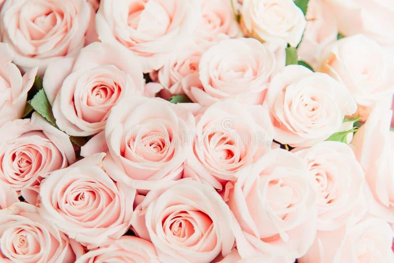 Панорамная предпосылка тона красивой розы пинка мягкого, предпосылка знамени крышки природы стоковая фотография rf