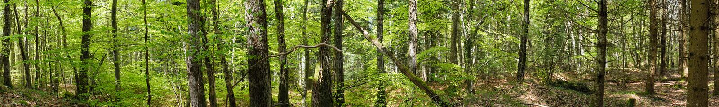 Панорамная съемка в лесе стоковые изображения