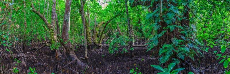 Панорамное изображение тропического леса стоковое изображение