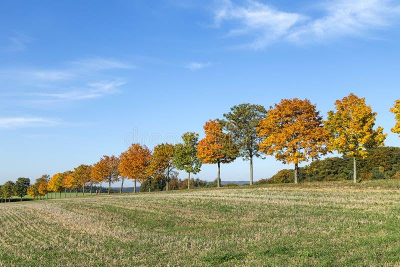 Панорамный ландшафт с переулком, полями и лесом стоковое фото