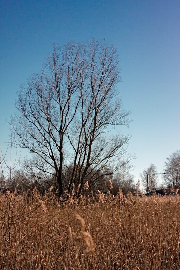 Панорамный взгляд болотистой области озера, с тростниками в стоковое фото
