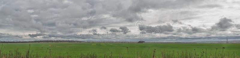 Панорамный взгляд зеленого пшеничного поля и темных облаков шторма с дождем Луг ландшафта зеленый стоковые фото