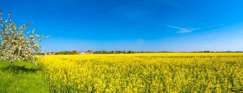 Панорамный взгляд красивого ландшафта фермы поля рапса внутри стоковые фото