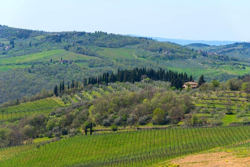 Панорамный взгляд сельской местности и виноградников в зоне Chianti, Тосканы, Италии стоковое изображение rf