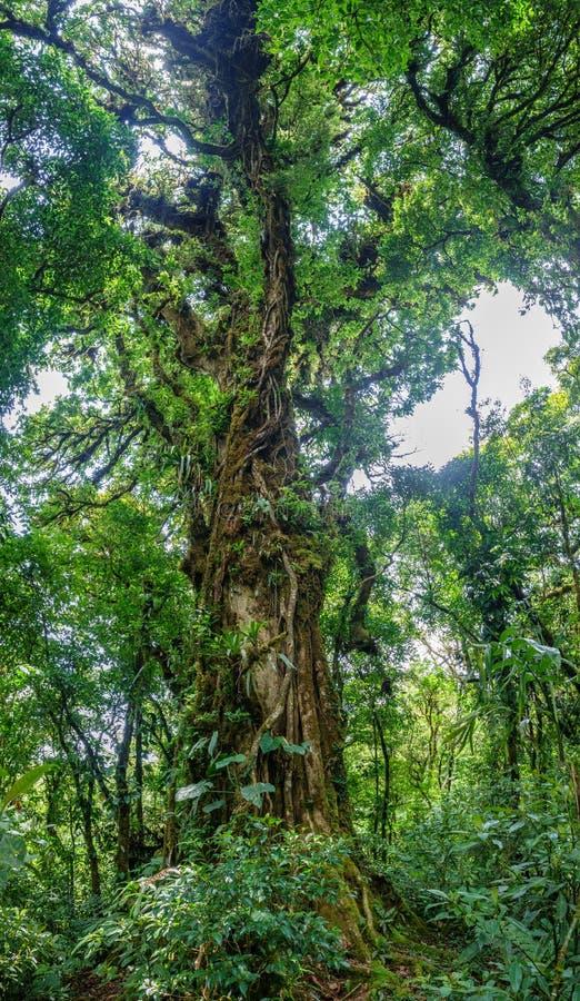 Панорамный взгляд всего дерева в лесе стоковая фотография