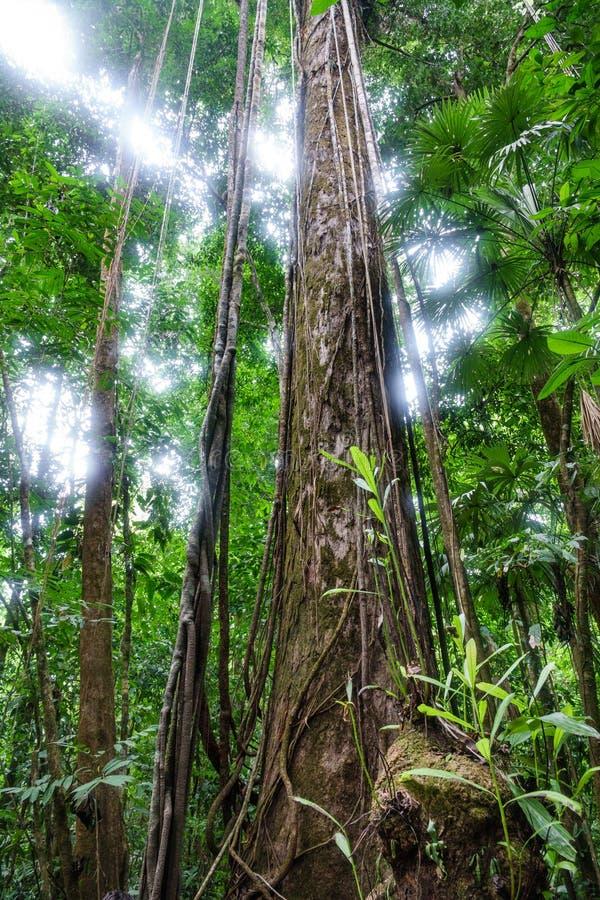 Панорамный взгляд всего дерева в лесе стоковое изображение