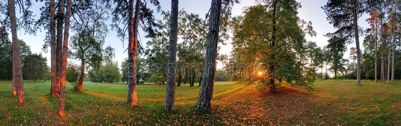 Панорамный взгляд леса, 360 градусов стоковые фотографии rf
