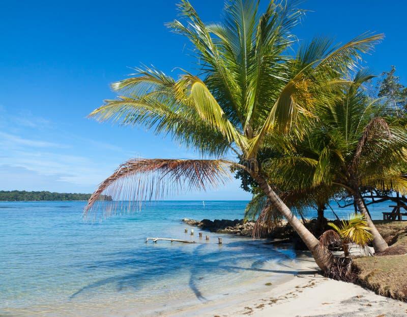 Панорамный взгляд пляжа toro del Boca стоковая фотография
