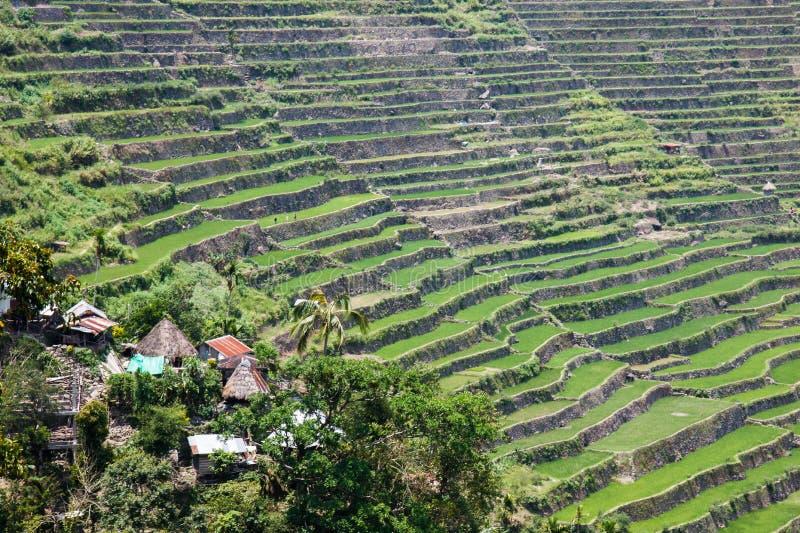 Панорамный взгляд террас поля риса Batad в провинции Ifugao, Banaue, Филиппинах стоковое изображение rf