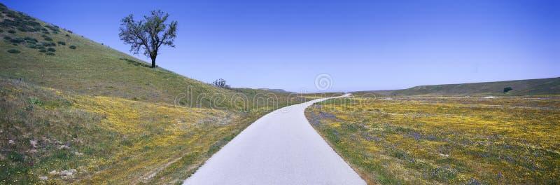 Панорамный взгляд цветков весны, дерева и вымощенной дороги с трассы 58 на дороге заводи раковины к западу от Bakersfield, Калифо стоковые изображения