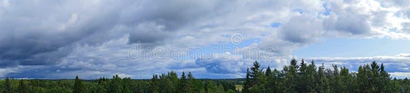 Панорамный вид драматических облаков над вечнозелеными деревьями стоковое изображение rf