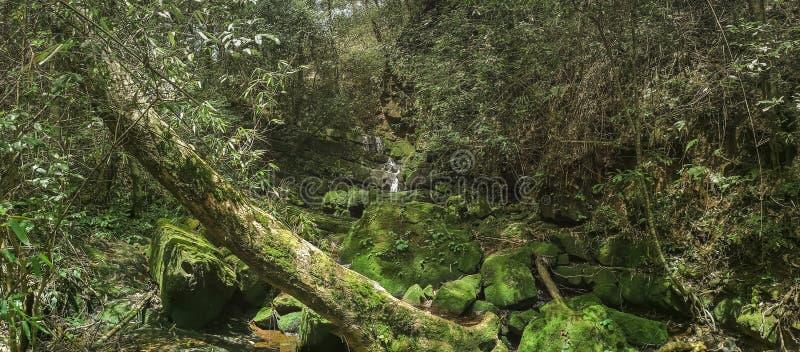 Панорамный красивый глубокий водопад леса в Таиланде стоковые фотографии rf