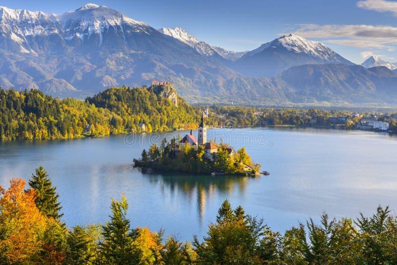 Панорамный кровоточенный вид на озеро, Словения стоковое изображение rf