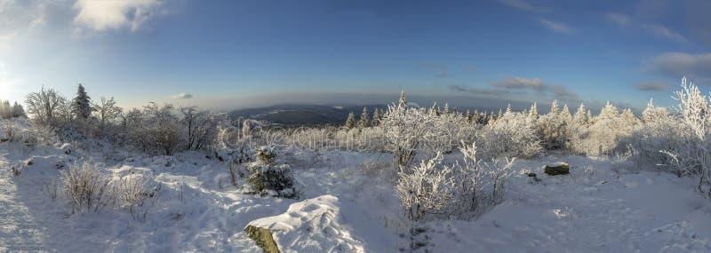 Панорамный ландшафт зимы на Feldberg стоковое фото rf