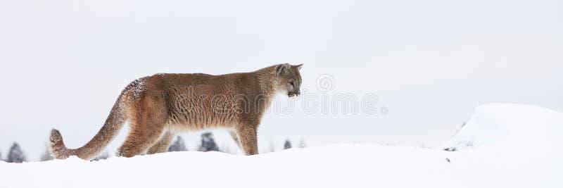 Панорамный льва горы стоковая фотография