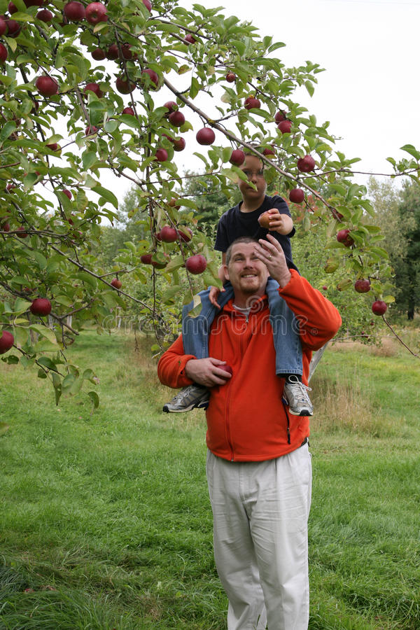 папа яблока давая к стоковое изображение
