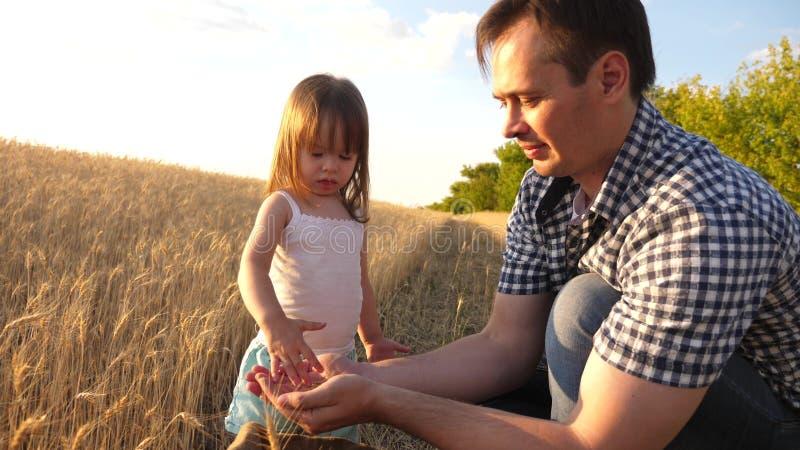 Папа agronomist и небольшой ребенок играет с зерном в сумке на пшеничном поле фермер отца играет с меньшим сыном стоковые изображения