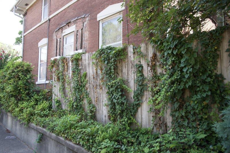 Папоротники и лозы растя на загородке стоковое изображение