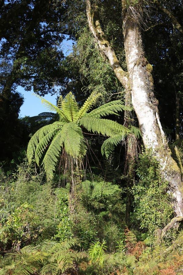 Папоротник дерева среди деревьев на солнечный день стоковое фото rf