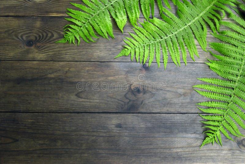 Папоротник леса стоковые изображения