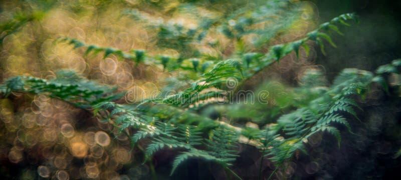 Папоротник детали леса природы стоковое изображение
