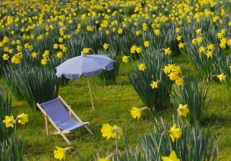парасоль лужка палубы daffodil стула стоковая фотография