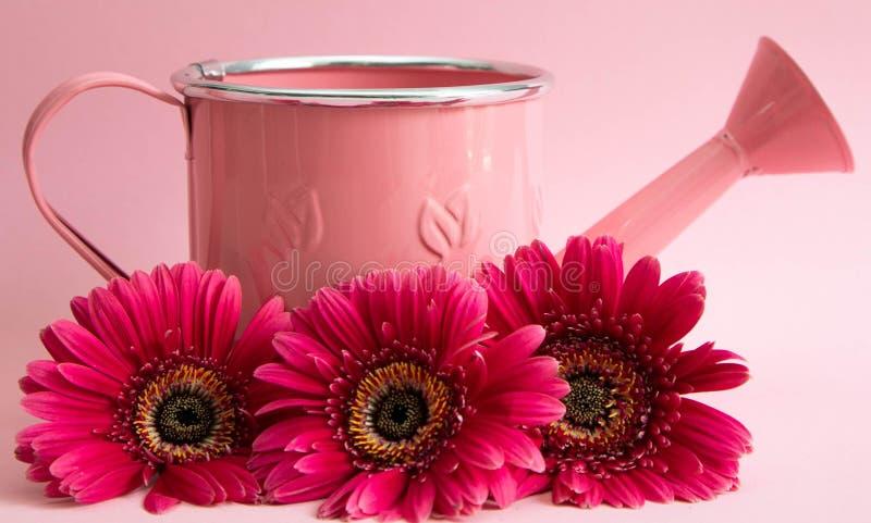 Пара белых носков для детей с розовыми носками и пяток, с розовыми точками, на розовой предпосылке Носки для девушек стоковая фотография