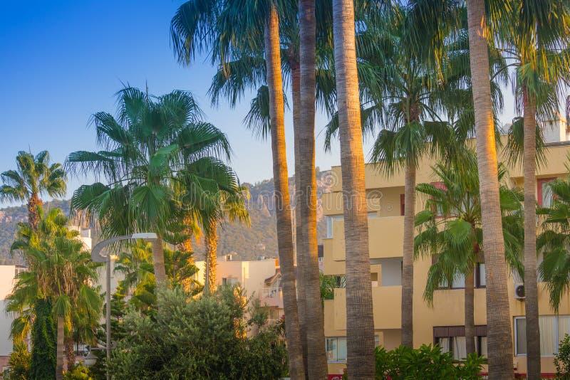 Пара высокорослых пальм возвышается над полем для гольфа Пальмы на предпосылке гор и saneago неба стоковое фото