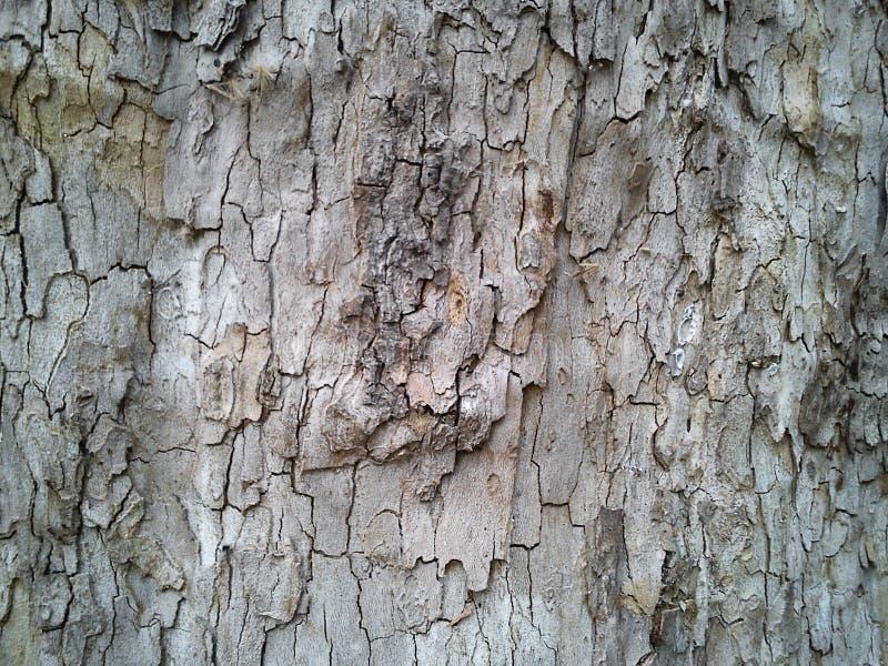 Пара дерева Коричневые и бэйдж-цвета в извилистой паре стоковые фотографии rf