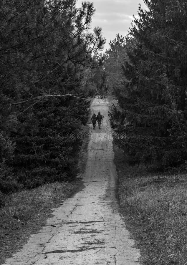 Пара держа руки идя на сельскую дорогу через лес стоковое фото rf