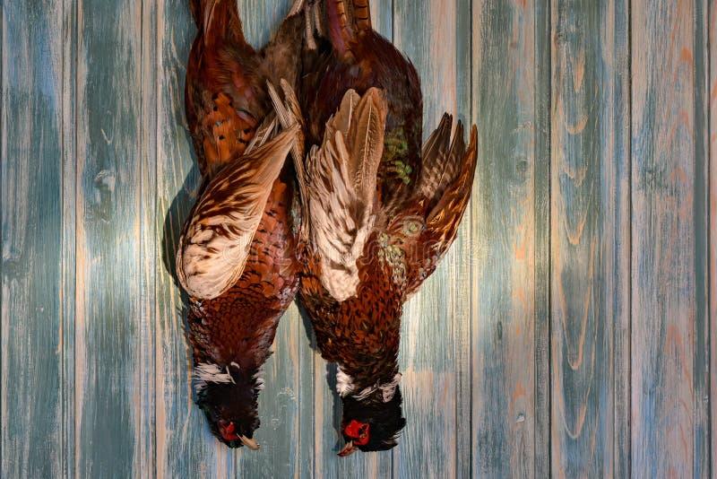 Пара мужских фазанов на старой деревянной предпосылке Сезон звероловства Скопируйте затир стоковое фото