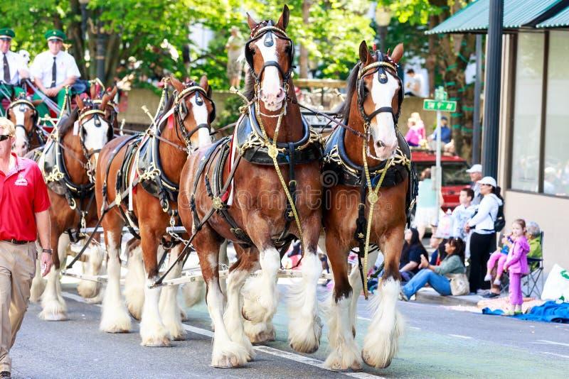 Парад 2014 Портленда грандиозный флористический стоковые изображения rf