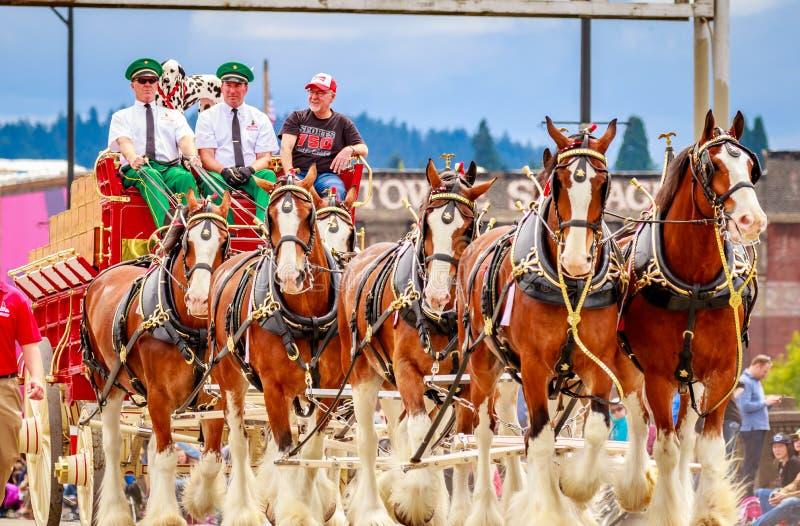 Парад 2016 Портленда грандиозный флористический стоковые изображения rf