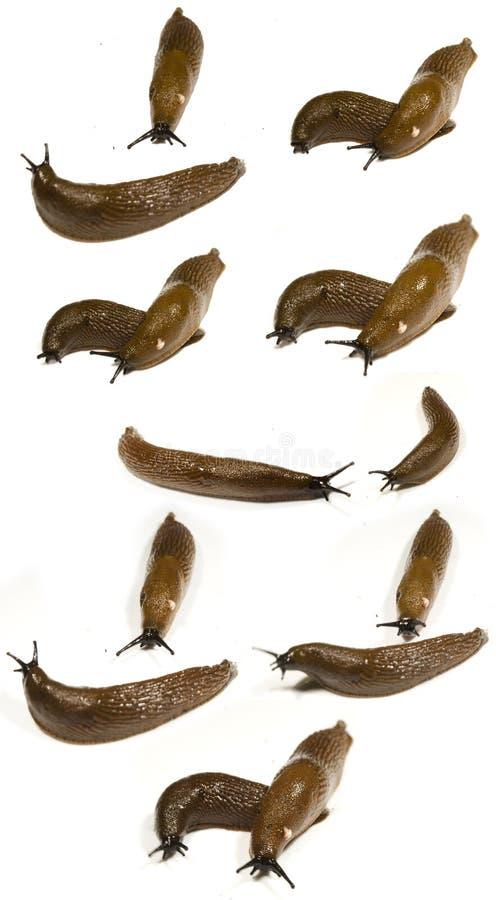 пара предпосылки slugs белизна стоковые фотографии rf