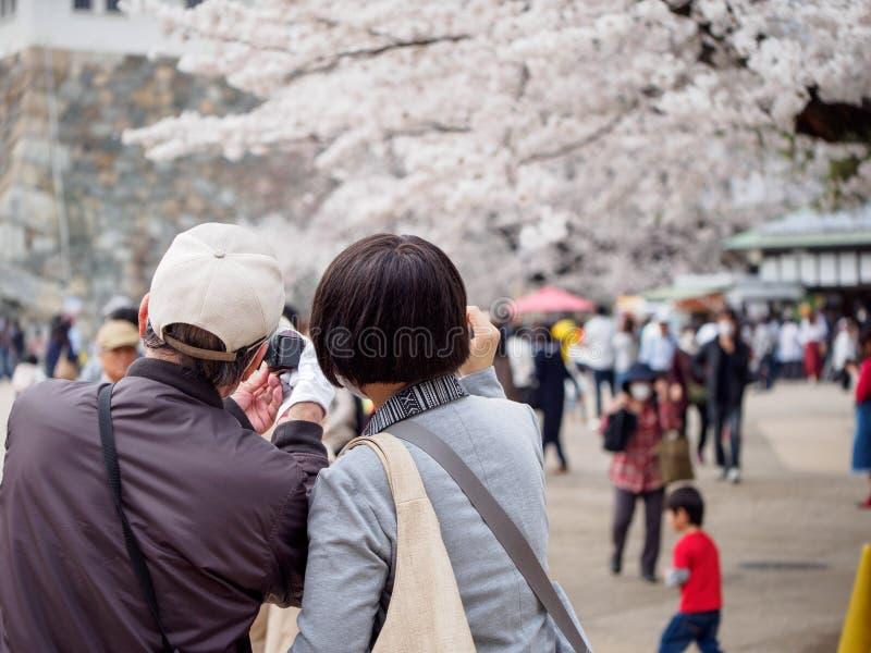 Пара принимает selfie около Somei Yoshino замок Сакуры, Нагои, Япония стоковые фотографии rf