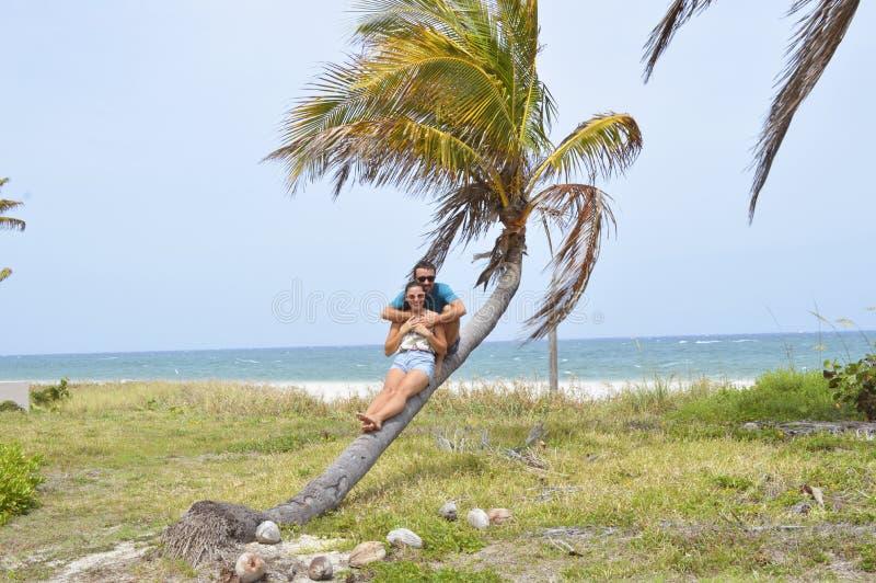 Пара сидя на пальме стоковое изображение rf