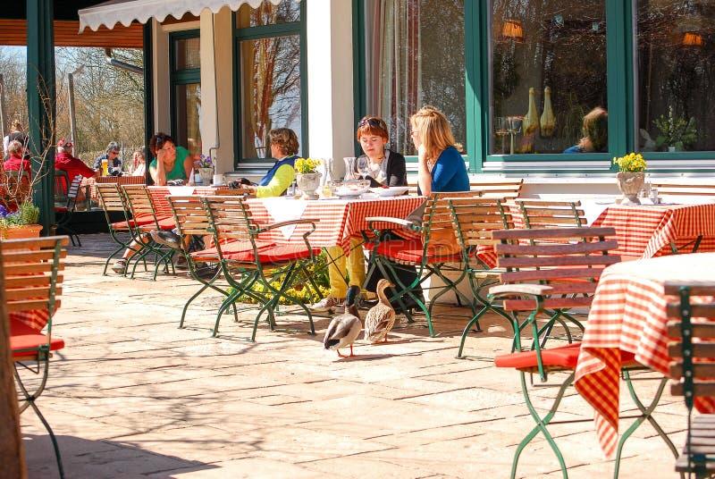 Пара уток причаливает таблице в ресторане стоковая фотография rf