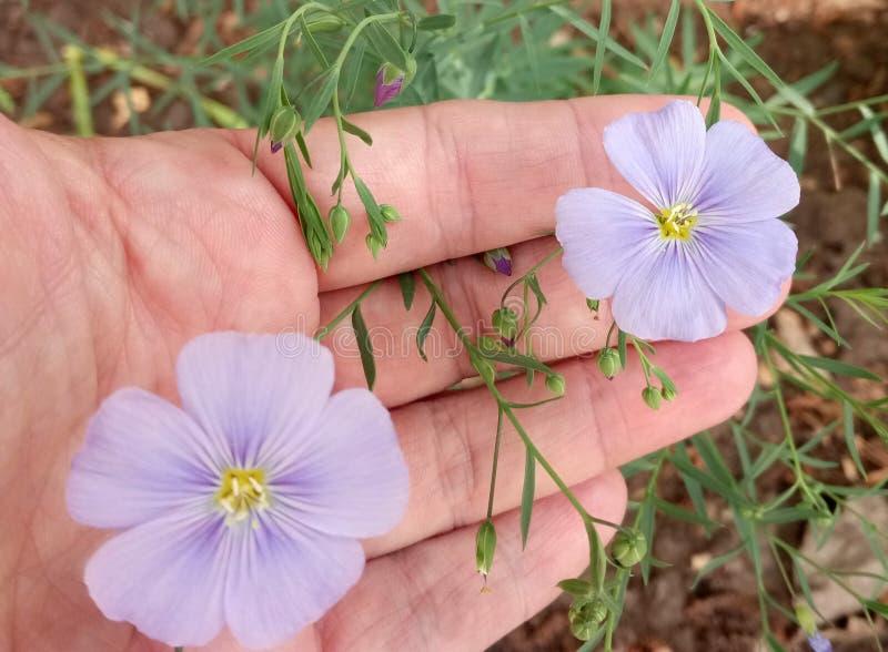 пара чувствительных цветков в саде стоковая фотография