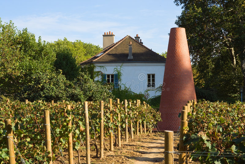 парижский виноградник стоковое фото