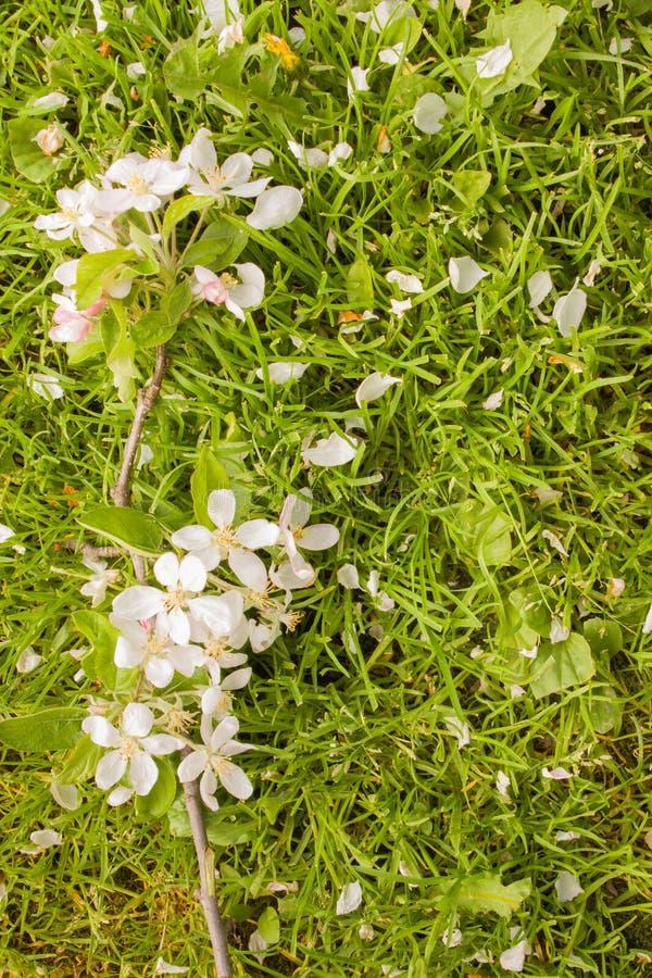 Download Парик с цветками яблони стоковое фото. изображение насчитывающей arachnids - 40577454